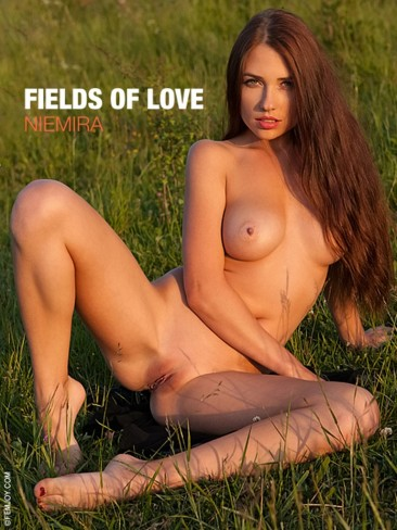 Niemira A - Fields Of Love